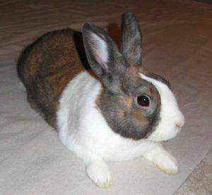 My bunny, Peanut!